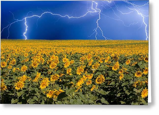 Sunflower Lightning Field  Greeting Card