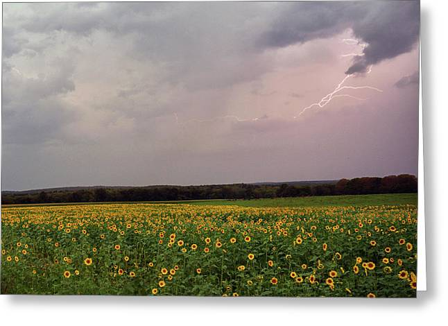 Sunflower Lightning - Griswold, Ct. Greeting Card