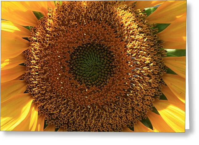 Sunflower  Greeting Card by Marna Edwards Flavell