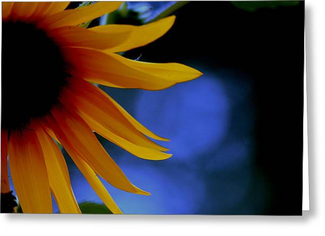 Sunflower Greeting Card by Martin Morehead