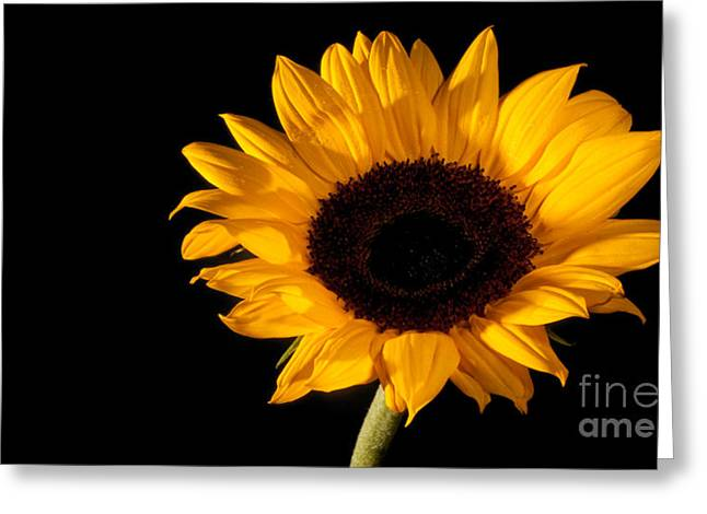 Sunflower Greeting Card by Michael Herb