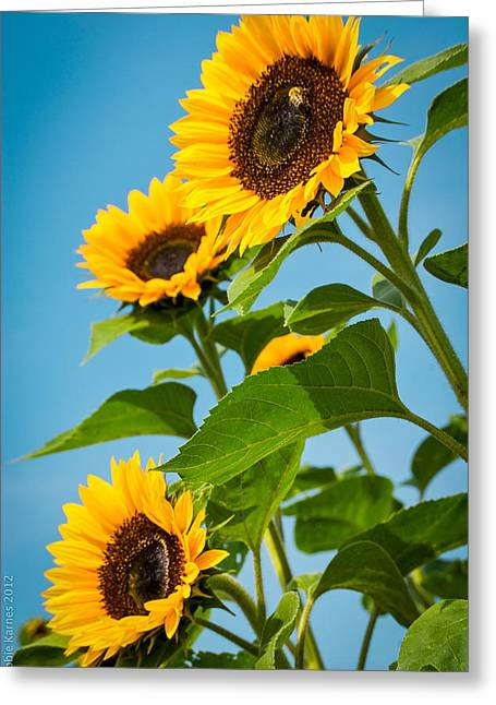Sunflower Morning Greeting Card by Debbie Karnes