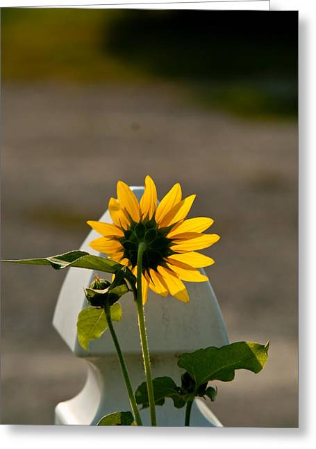 Sunflower Morning Greeting Card by Douglas Barnett