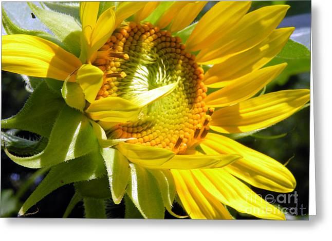 Sunflower No.35 Greeting Card by Christine Belt