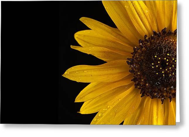Sunflower Number 3 Greeting Card by Steve Gadomski