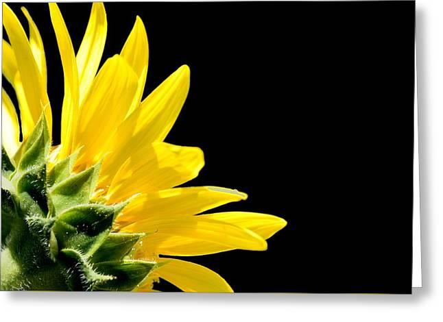 Sunflower On Black Greeting Card