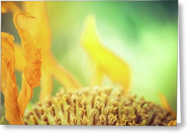 Sunflower On Fire Greeting Card