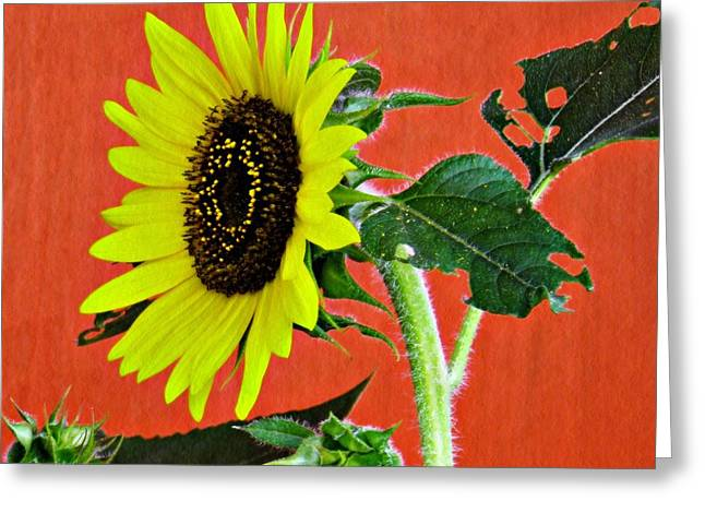 Greeting Card featuring the photograph Sunflower On Red 2 by Sarah Loft