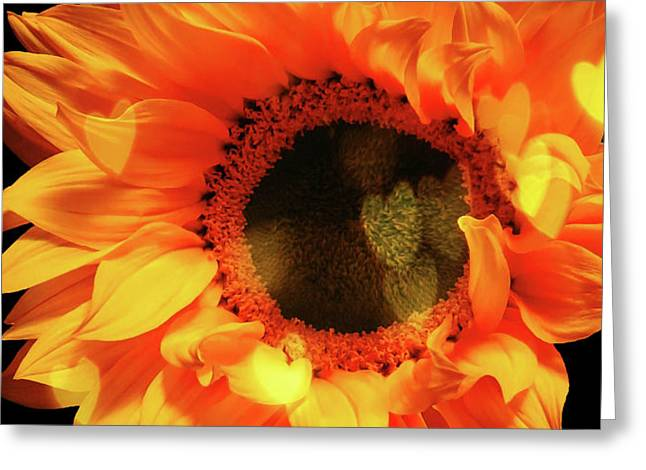 Sunflower Passion Greeting Card
