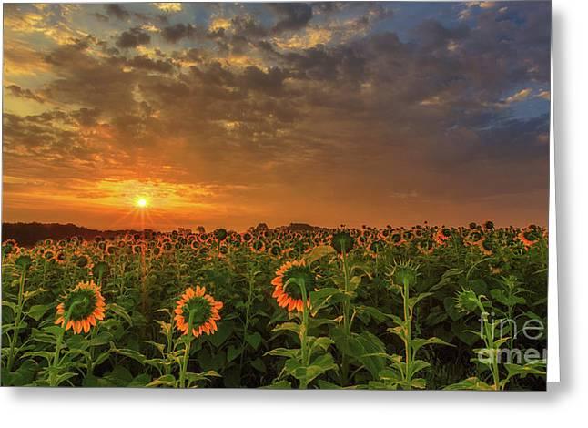 Sunflower Peak Greeting Card