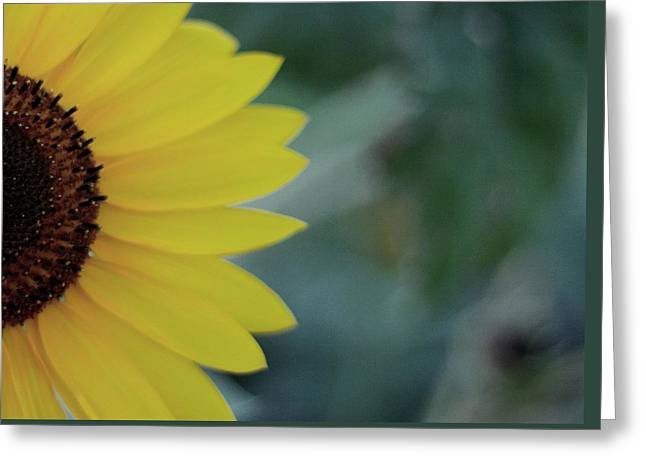 Sunflower Peeking.. Greeting Card
