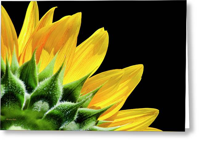 Greeting Card featuring the photograph Sunflower Petals by Christina Rollo