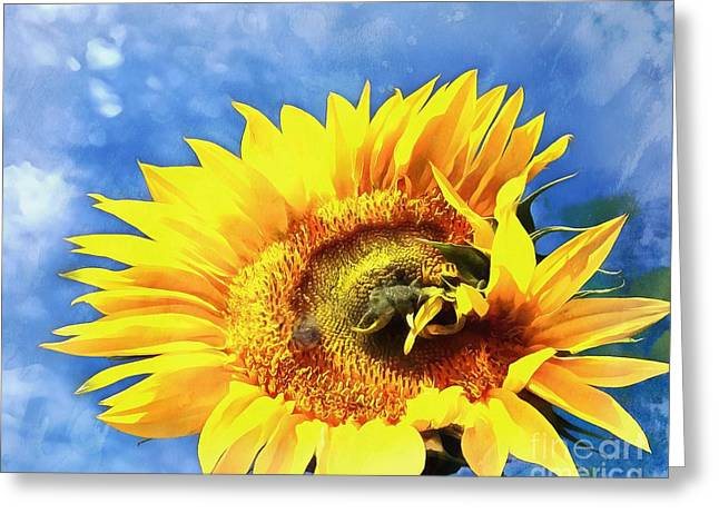 Sunflower - Reach Greeting Card