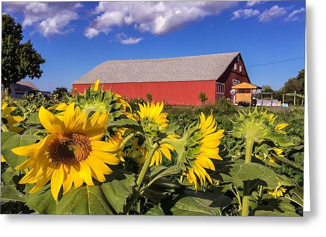 Sunflower Red Barn Greeting Card