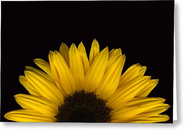 Sunflower Rising Greeting Card