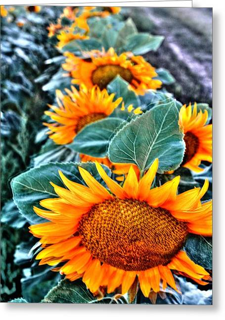 Sunflower Row Greeting Card