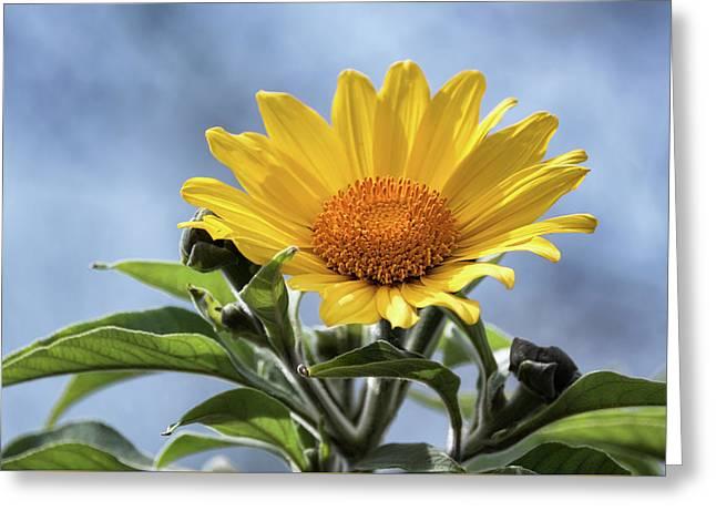 Greeting Card featuring the photograph Sunflower  by Saija Lehtonen
