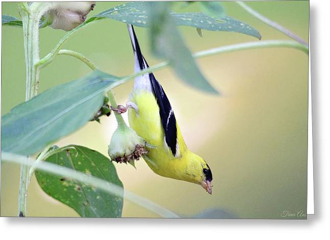 Greeting Card featuring the photograph Sunflower Seed Snack by Trina Ansel