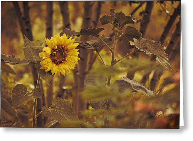 Greeting Card featuring the photograph Sunflower Sentry by Douglas MooreZart