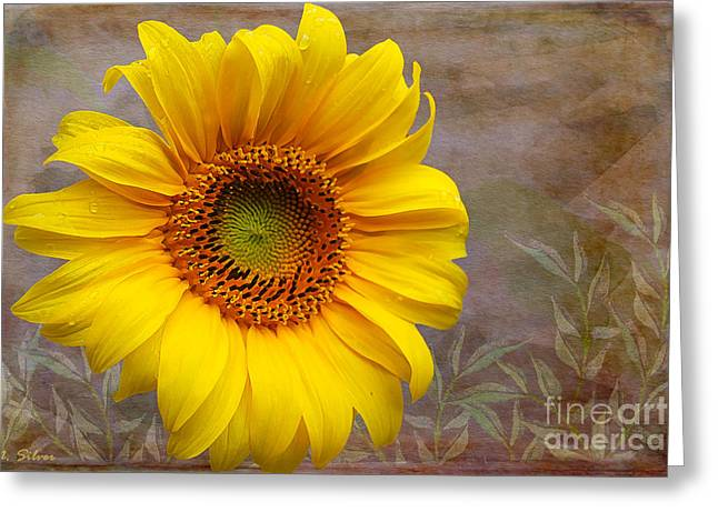 Sunflower Serenade Greeting Card