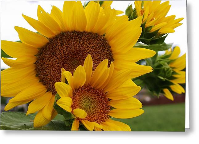 Greeting Card featuring the photograph Sunflower Show by Bruce Bley