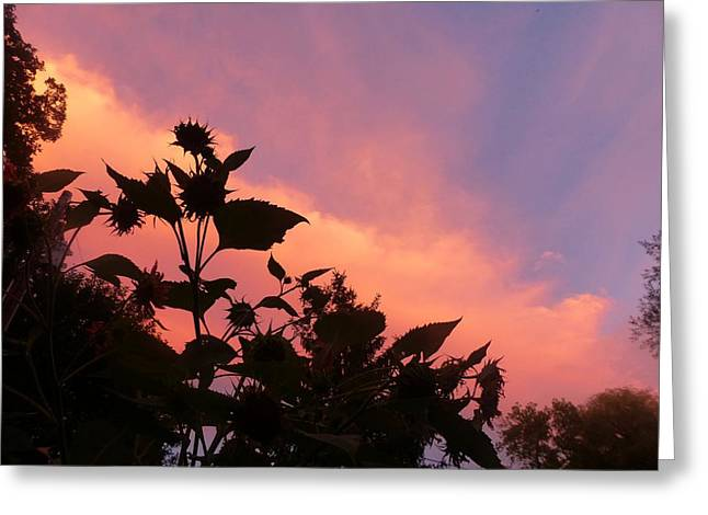 Sunset In Chatfield Greeting Card