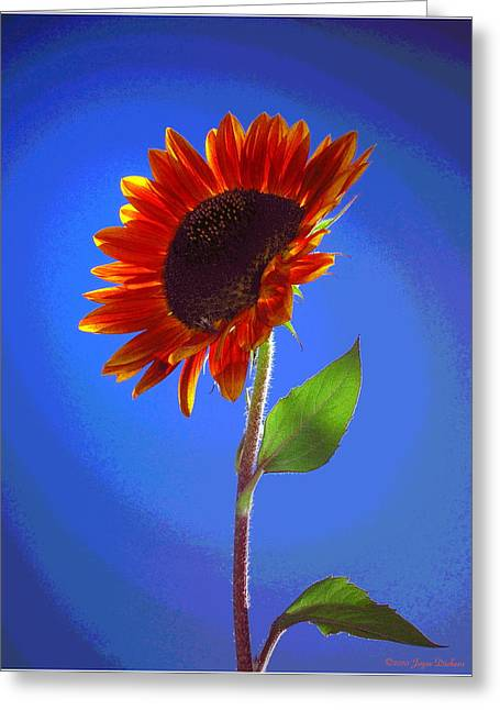 Greeting Card featuring the photograph sunflower Solitaire by Joyce Dickens