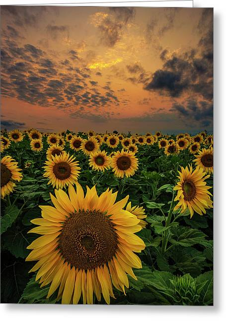 Greeting Card featuring the photograph Sunflower Sunset  by Aaron J Groen
