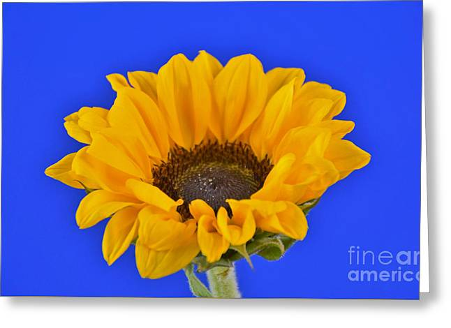 Sunflower Sunshine 406-6 Greeting Card