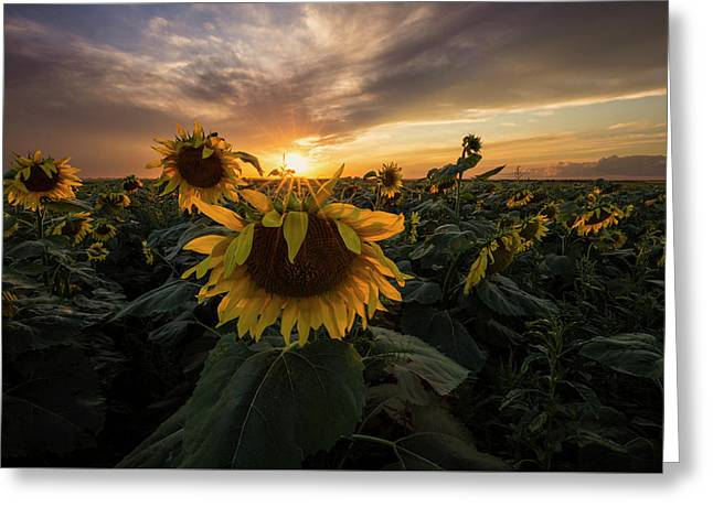 Greeting Card featuring the photograph Sunflower Sunstar  by Aaron J Groen