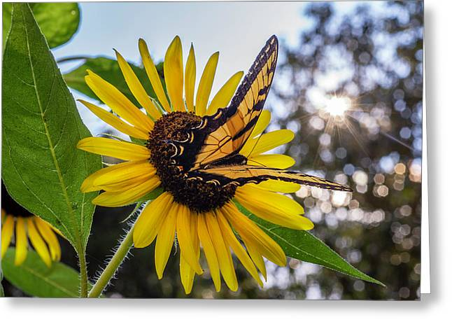 Sunflower Swallowtail Greeting Card