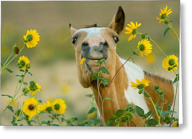 Sunflower Thief Greeting Card