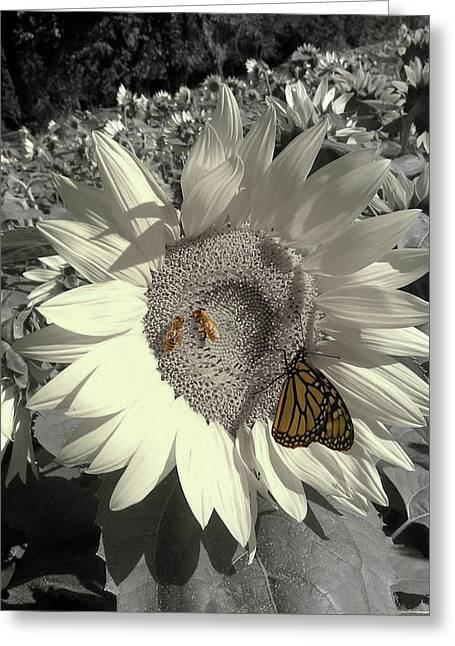 Sunflower Tint Greeting Card