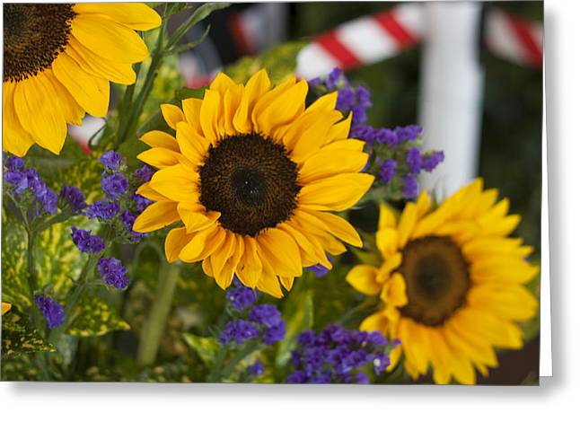 Sunflower Triplets Greeting Card by Kevin  Sherf