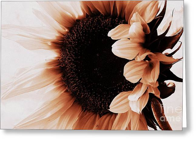 Sunflower - Waiting For You Greeting Card