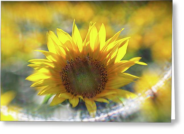 Sunflower With Lens Flare Greeting Card