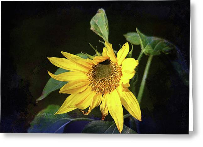Greeting Card featuring the photograph Sunflower With Texture by Trina Ansel