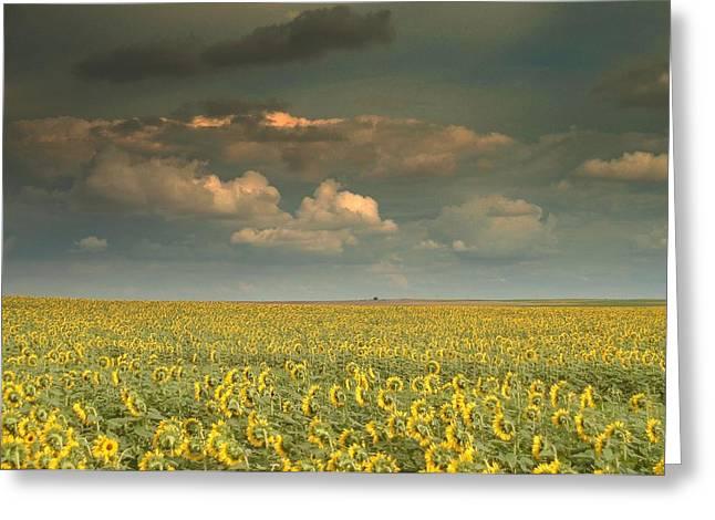 Sunflower World.. Greeting Card