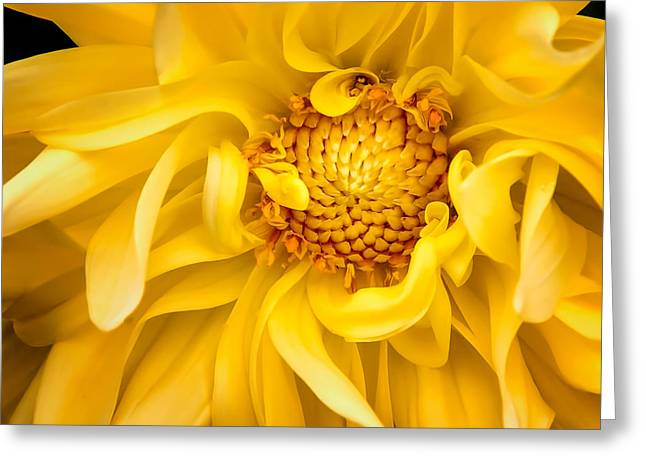 Sunflower Yellow Greeting Card