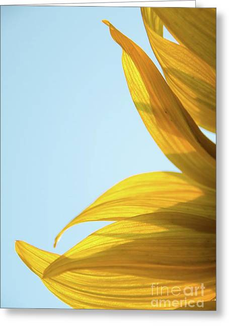 Greeting Card featuring the photograph Sunflowers 11 by Andrea Anderegg