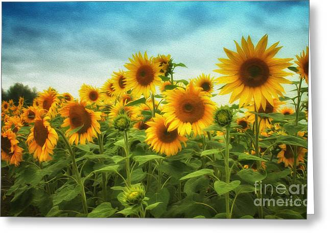 Sunflowers All Over Greeting Card