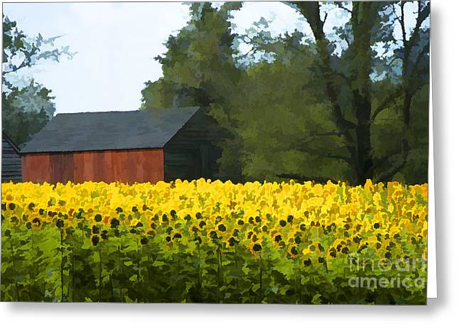 Sunflowers And Barn  Greeting Card