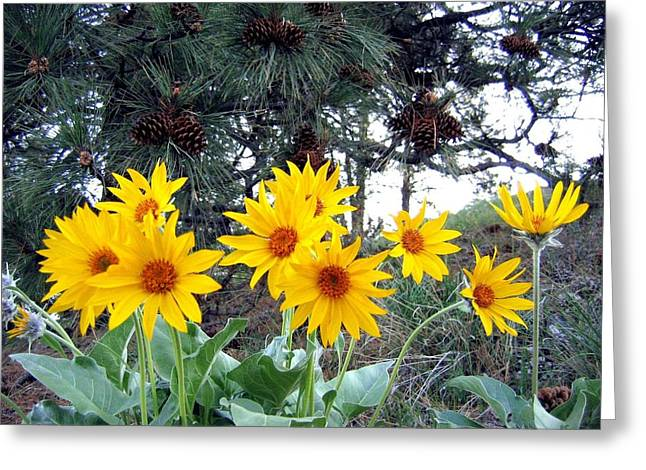 Pleasing Greeting Cards - Sunflowers And Pine Cones Greeting Card by Will Borden