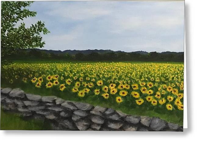Sunflowers At Buttonwood Farms Greeting Card