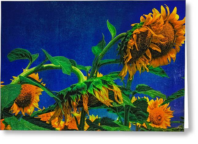 Sunflowers Awakening Greeting Card