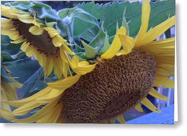 Sunflowers Greeting Card by B L Qualls