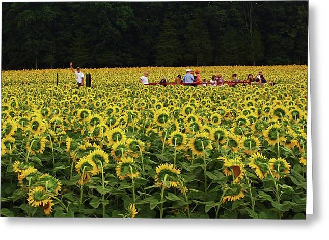 Sunflowers Everywhere Greeting Card