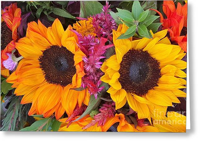 Sunflowers Eyes Greeting Card by Jasna Gopic