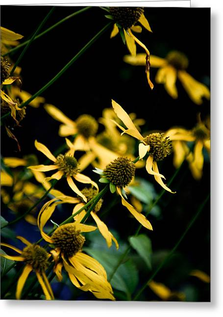 Sunflowers In North Carolina Greeting Card by Jonathan Hansen