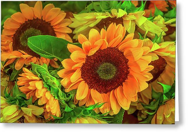 Sunflowers In The Garden Greeting Card